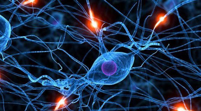 بوڑھے افراد کے دماغوں میں بھی نوجوانوں کی طرح نئے خلیات بنتے ہیں، تحقیق