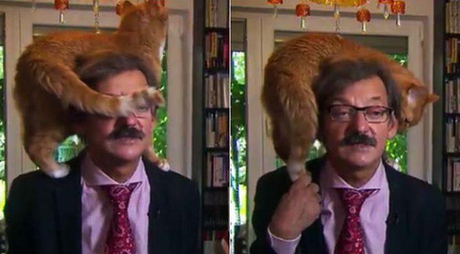 لائیو ٹرانسمیشن میں سیا سی تجزیہ نگار ی کے دو ران بلی کی انٹری