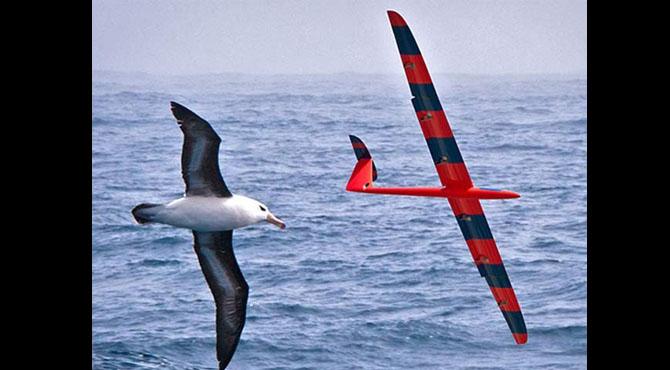 پرندوں کی طرح پرواز سیکھنے والا روبوٹ گلائیڈر