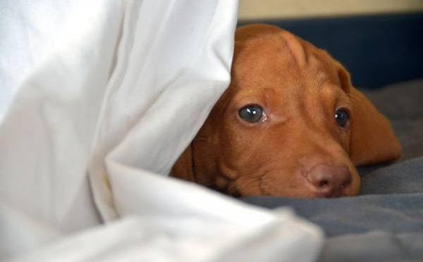 کتے کے ساتھ اجتماعی زیادتی، اور یہ کام کرنے سے پہلے اس کے ساتھ کیا کیا گیا؟ جان کر شیطان کو بھی یقین نہ آئے