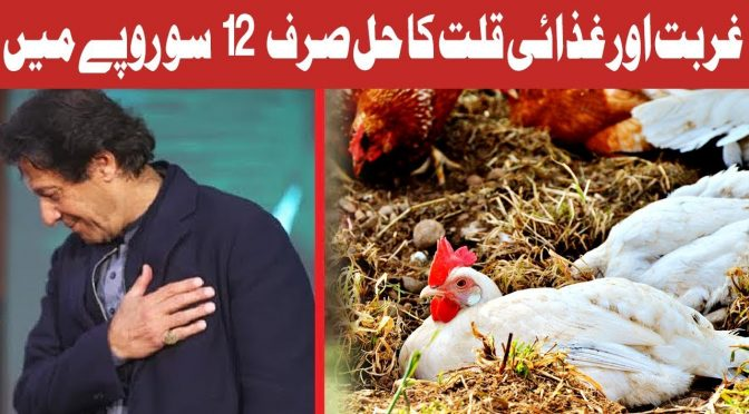 Hot Lunch | PM Imran Khan Chicken Scheme | 11 December 2018 | Channel Five