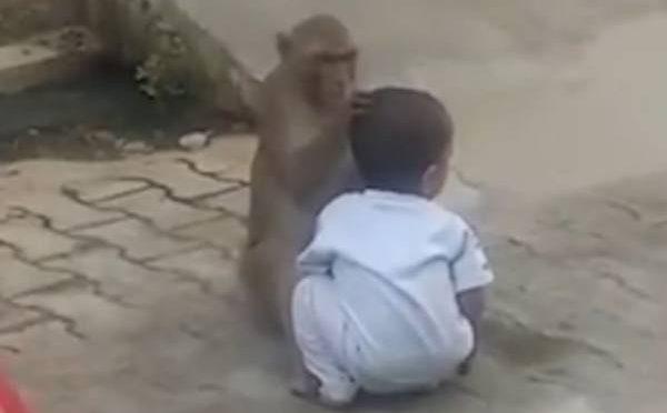 بندر نے کھیلنے کے لئے بچہ اغوا کرلیا