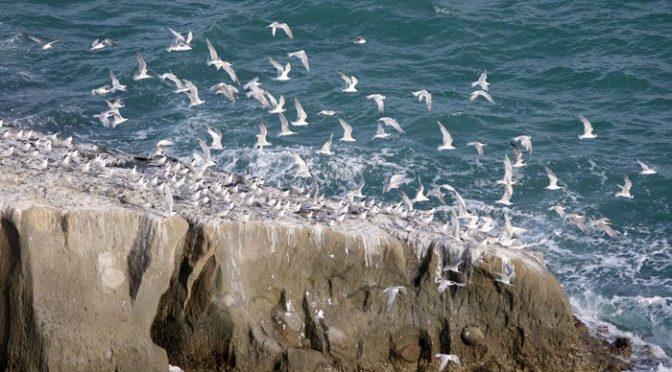 سائبیریا اور وسطی ایشیائی ریاستوں سے مہمان موسمی پرندوں کی بلوچستان آمد کا سلسلہ شروع