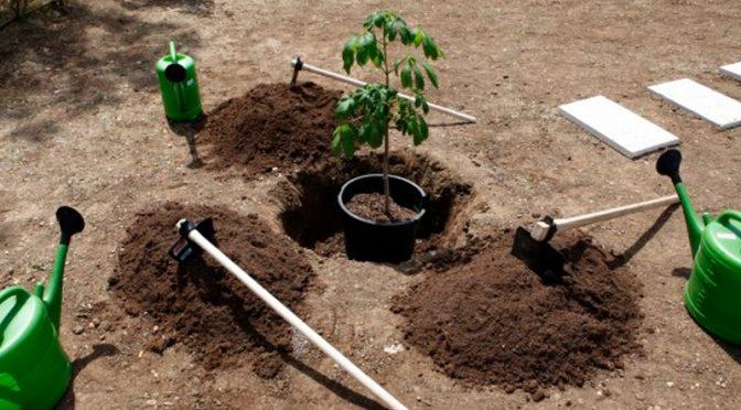 لاہور ہائی کورٹ نے ہر ہاﺅسنگ سوسائٹی میں فی گھر دو درخت لگانے کو لازمی قرار دے دیا