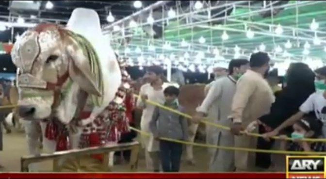 کراچی کی مویشی منڈی میں سوا کروڑ کے جانور نے سب کو حیران کر دیا