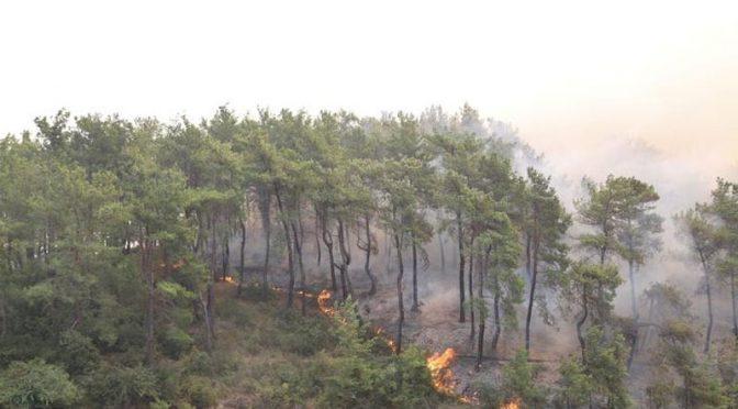 ترکی: جنگلات میں لگی آگ بےقابو، 4افراد ہلاک 180زخمی